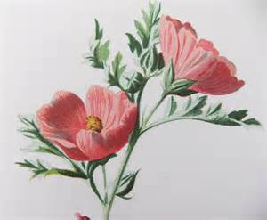 Vintage Flower Drawing - antique flower drawings www galleryhip com the hippest