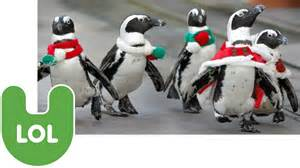christmas penguins youtube