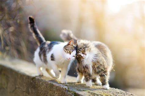 powerful love lessons  learn   animal