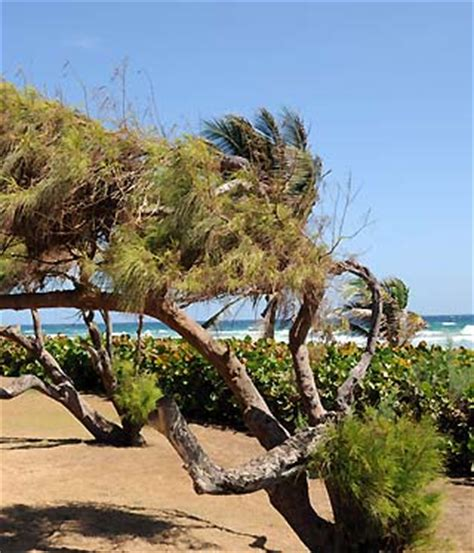 5 themes of geography barbados barbados weather forecasts and weather conditions