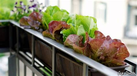balcony vegetable gardens balcony vegetable garden ideas for apartments