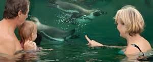spreewald schwimmbad schwimmen mit pinguinen spreewelten l 252 bbenau spreewald