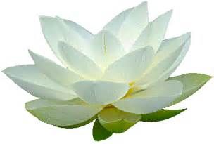 White Lotus Hours The Flames Of Youth
