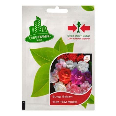 Bibit Benih Bunga Balsam Mawar Balsam 3 jual benih panah merah bunga balsam tom tom mixed hp