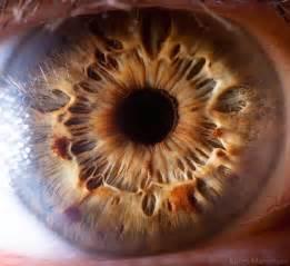 imagenes de ojos zoom macro photography of human eyes creatives wall