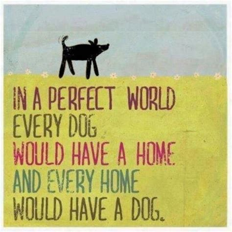 every dogs pin by petenzymes 174 on pets inspire us