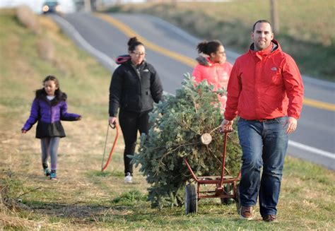 11 places to cut your own christmas tree in lancaster