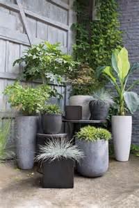 17 meilleures id 233 es 224 propos de jardinage en pots sur