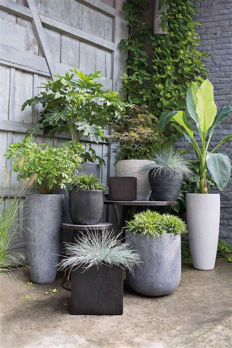 pot jardin design 17 meilleures id 233 es 224 propos de arbuste en pot sur poulailler jardiland arbuste