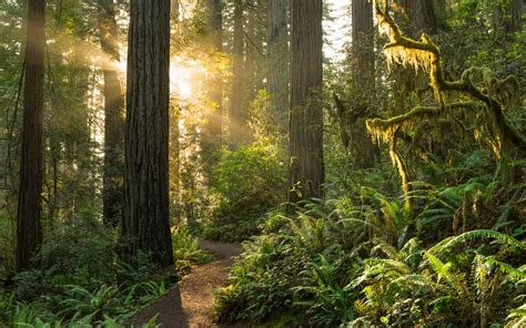 Delightful Christmas Family Vacations #6: Redwood-national-forest-hero-REDWOOD1202.jpg?itok=05N0KqsX