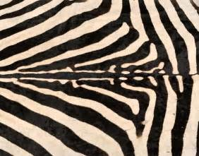 zebrafell teppich zebra skin rug at 1stdibs