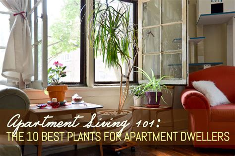 best plants for apartment air quality apartment living 101 the 10 best plants for apartment