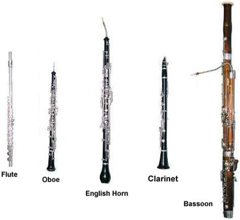 woodwind section all in the woodwind family instruments pictures to pin on