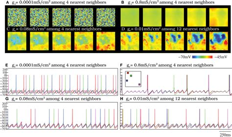 spatio temporal pattern theory frontiers transient dynamics and rhythm coordination of