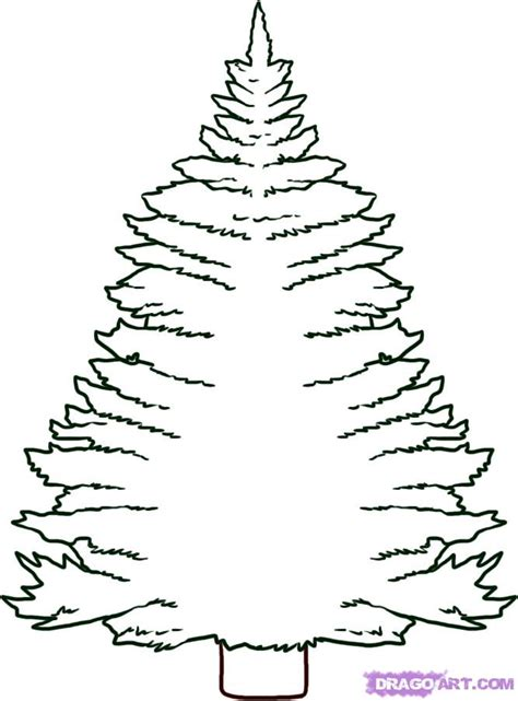 how to draw a pine tree step by step trees pop culture