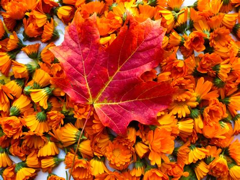 autumn flower floral trends for autumn flower pressflower press