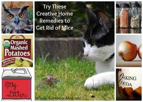 natural home remedies   rid  mice