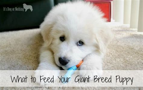 feeding puppies at 8 weeks what to feed your breed puppy it s or nothing