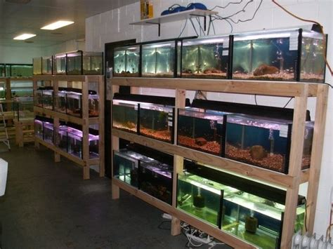 Aquarium Rack by 80 Best Images About Pets Aquarium Stands And Racks On Aquarium Stand 55 Gallon