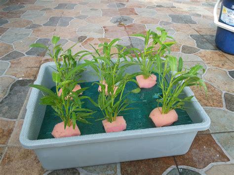 Paket Hidroponik Pemula Benih Bibit Rockwool Netpot Nutrisi Ab Mix starter kit hidroponik wick system 6 lubang purie garden