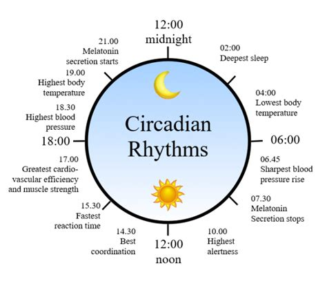 eating pattern meaning two minute explainer circadian rhythms lux magazine
