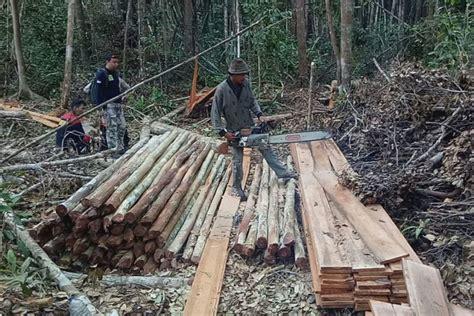Undang Undang Kehutanan Dan Illegal Logging gerak cepat aparat dalam pemberantasan pembalakan liar di