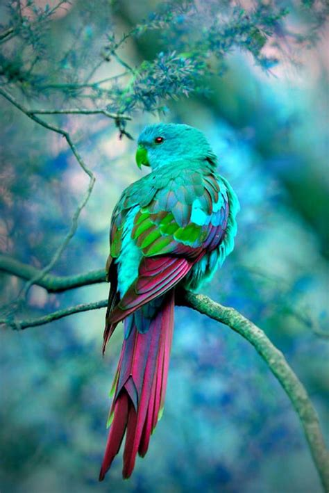 colorful bird pictures beautiful colorful bird търсене папагали