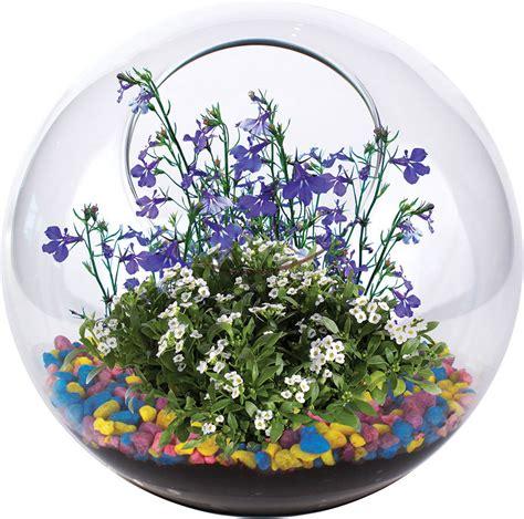 Garden In Glass Mini Garden Glass Terrarium