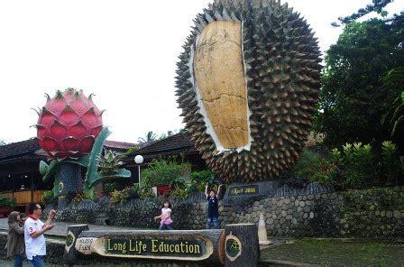 Jual Bibit Strawberry Di Medan 22 tempat wisata di puncak bogor jawa barat yang wajib