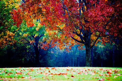 colorful landscapes colorful landscape photography autumn tree fog and mist