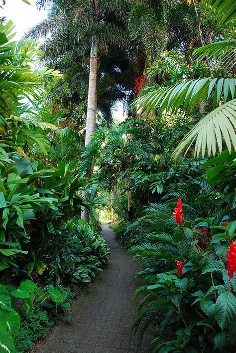Garden Cairns Friends Of Botanic Gardens Cairns Cairns Local Tourism