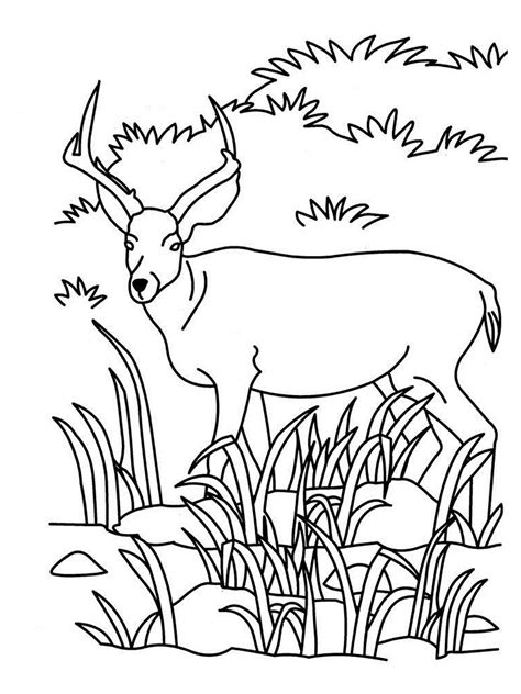 coloring pages of dangerous animals realistic forest animal coloring pages coloring pages