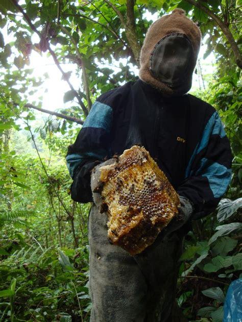 muchamad tawariq cvsialang jaya barokah madu hutan