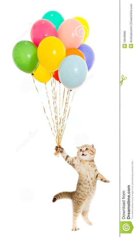 Kitten or cat with colorful balloons isolated stock image image 19648985