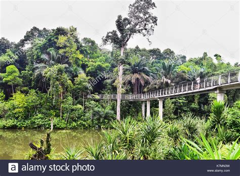singapore botanic gardens stock photos singapore botanic
