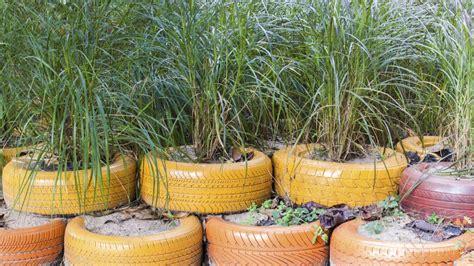 imagenes de jardines con neumaticos neum 225 ticos reciclados para jard 237 n en jardiner 237 a