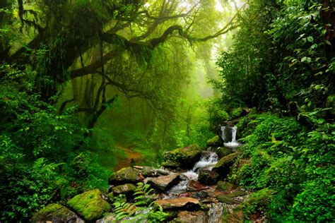 amazon jungle tropical rainforest an in depth explanation of the tropical rainforest climate