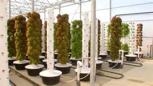 plants that grow in rooms us ok green county farmers use new system to grow