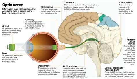 how does light pass through the eye science of vision how do our eyes enable us to see how