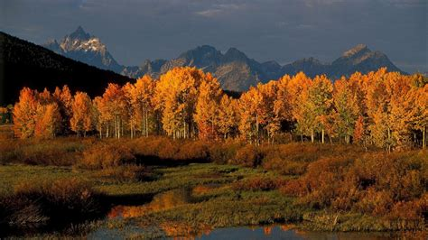 jackson hole wyoming vacations exclusive deals local