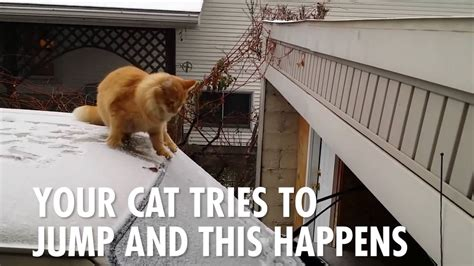 it s hot out funny images this is how you know it s too freaking cold outside youtube
