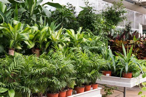 cactus da interno piante grasse da interno piante cascanti da interno