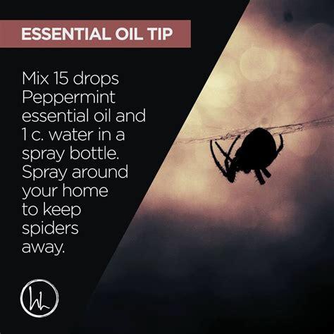 how to keep spiders out of basement de 25 bedste id 233 er inden for keep spiders away p 229 essentielle olier anvendelse