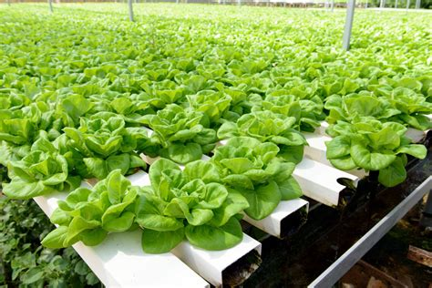 hydroponics and the organic label part one carolina