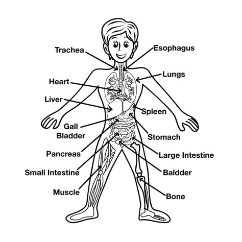 human body coloring pages for kindergarten human anatomy coloring sheets the human body parts for
