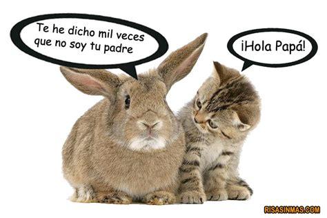 un gato y un animaladas conversaci 243 n entre un gato y un conejo
