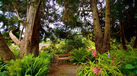 Fort Bragg Botanical Garden Mendocino Coast Botanical Gardens In Fort Bragg California Expedia