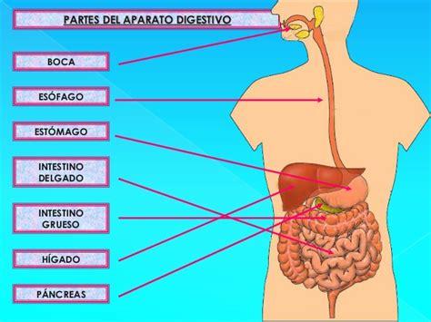 imagenes del sistema digestivo dibujo aparato digestivo