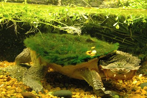 Mata Ponds turtles archives the cincinnati zoo botanical garden