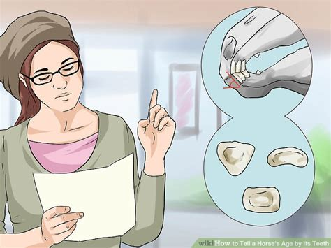 how can you tell a s age how to tell a s age by its teeth with pictures wikihow